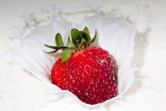 Strawberry splashing in cream. A juicy red strawberry splashing into cream Royalty Free Stock Images