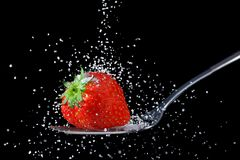 Strawberry sprinkled with sugar. A strawberry being sprinkled with granulated sugar, isolated on a black background royalty free stock images