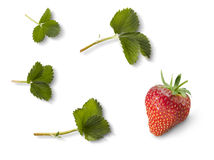Strawberry and strawberry leafs Stock Photo