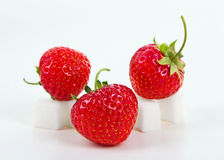 Strawberry on sugar cube Royalty Free Stock Images