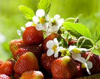 Strawberry in sunlight Royalty Free Stock Photos