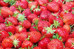 Strawberry texture - filled frame. Nice texture made of ripe and juicy strawberries Royalty Free Stock Photography