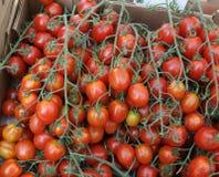 Strawberry tomato, Solanum lycopersicum Stock Image