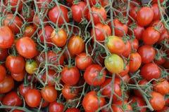 Strawberry tomato, Solanum lycopersicum Stock Images