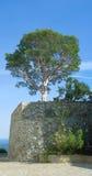 Strawberry tree. On a Black Sea shore royalty free stock photography