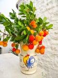 Strawberry tree. In a ceramic vase in Puglia, Italy royalty free stock image