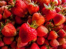 Strawberry. The Strawberry Tree is collect it for future use Stock Photos