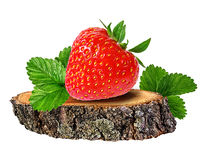Strawberry on a tree stump isolated on white. Background Royalty Free Stock Photography