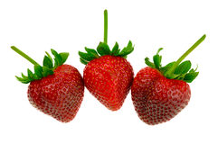 Strawberry Trio. Three strawberries with stems on white field. Isolated Stock Images