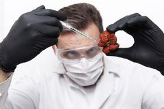 In a strawberry of unusual shape, a scientist in protective goggles, a mask and gloves makes an injection. On a white background stock image