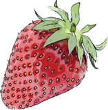 Strawberry Vector Cartoon royalty free illustration