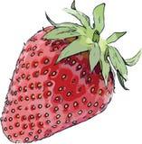 Strawberry Vector Cartoon Royalty Free Stock Photos