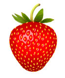 Strawberry. Vector. Stock Photos