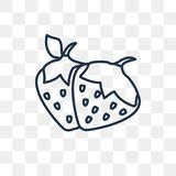 Strawberry vector icon isolated on transparent background, linear Strawberry transparency concept can be used web and mobile. Strawberry vector outline icon vector illustration