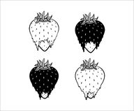 Strawberry vector illustration in black and white. Set of four straberry illustrations in black and white colrs melting Fragaria  ananassa Royalty Free Stock Image