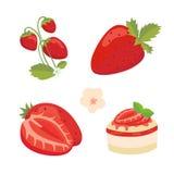 Strawberry  vector illustration set. Eps10 Stock Photography