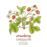 Strawberry. Vector illustration with strawberry on white background Stock Photography