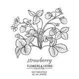 Strawberry. Vector illustration with strawberry on white background Royalty Free Stock Image