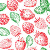 Strawberry vector seamless pattern drawing. Isolated hand drawn Royalty Free Stock Image