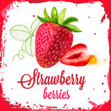 Strawberry vector watercolor Royalty Free Stock Images