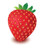 Strawberry vector in white background, strawberry vector, fruit vector Stock Photography