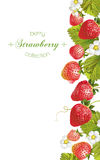 Strawberry vertical banner. Vector strawberry vertical banner. Design for tea, natural cosmetics, beauty store, dessert menu, organic health care products vector illustration