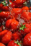 Strawberry Wash. Fresh ripe strawberries washed with cold water royalty free stock photos
