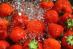Strawberry Wash. Fresh ripe strawberries washed with cold water royalty free stock images