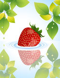 Strawberry in the water behind the tree Stock Photography
