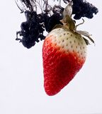 Strawberry in water. Black acrylic paint drops splashes royalty free stock image