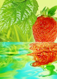 Strawberry and water level Stock Images