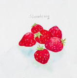 Strawberry watercolor painted Stock Image