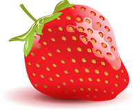 Strawberry on white background Royalty Free Stock Images