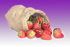 Strawberry on white Stock Images
