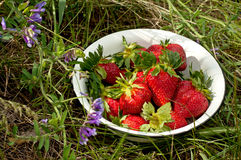 Strawberry on white dish Royalty Free Stock Photo