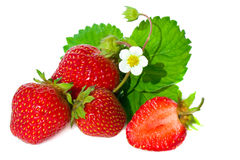 Strawberry with white flower and green leaves . Royalty Free Stock Photos