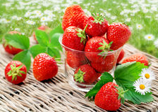 Strawberry on a willow tray Royalty Free Stock Images