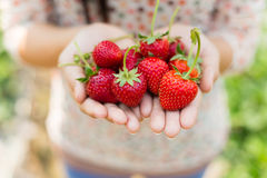 Strawberry on woman hands Stock Photography