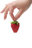 The strawberry in woman's hand. An appetizing strawberry in the woman's teasing hand at the white background Stock Photo
