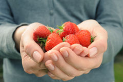 Strawberry in womans palms Stock Photo