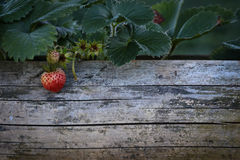 Strawberry on wood space Stock Photo