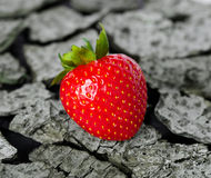 Strawberry on a wooden background Stock Photos