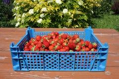 Strawberryes em uma caixa azul em uma tabela Foto de Stock Royalty Free