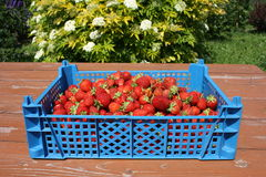 Strawberryes in una casella blu su una tabella Fotografia Stock Libera da Diritti