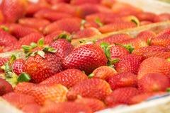 Strawberrys в деревянной коробке Стоковая Фотография