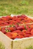 Strawberrys в деревянной коробке Стоковые Фото