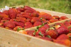 Strawberrys в деревянной коробке Стоковое Изображение