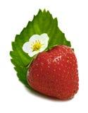 Strawberrys blossom Royalty Free Stock Photo