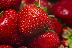 Strawberrys dulces rojos macros Cierre para arriba Concepto del alimento imagen de archivo libre de regalías