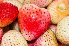 Strawberrysrood en wit stock foto's